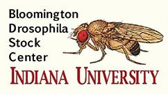 Bloomington Drosophila Stock Center - Indiana University