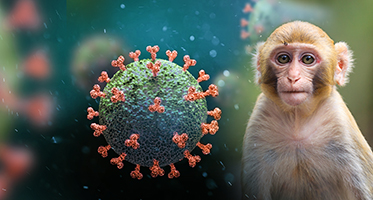 Animal Models and Resources for Coronavirus Research