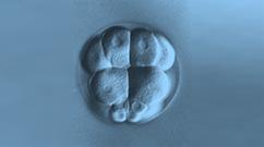 Image a cell dividing