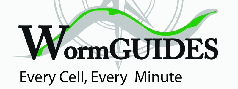 WormGUIDES - Every Cell, Every Minute
